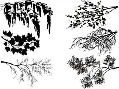 Väggdekor sex fjäderträdgrenar på vitt