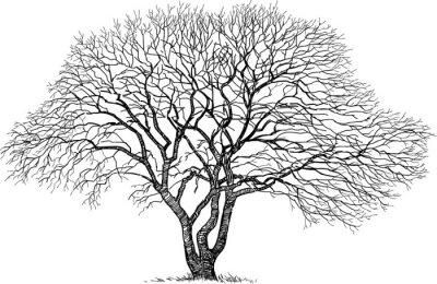 Väggdekor silhuett av det gamla trädet