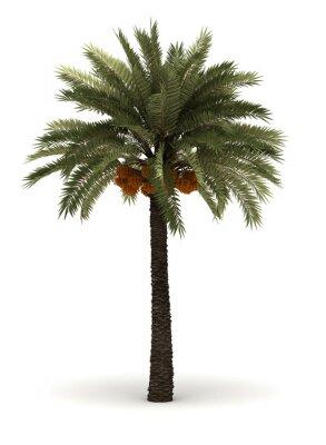Väggdekor Single Palm Tree