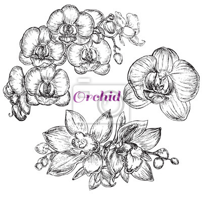 Väggdekor skiss stil svart orkidé