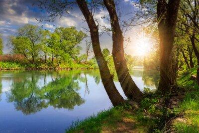 Väggdekor skogsälv med stenar och gräs vid solnedgången
