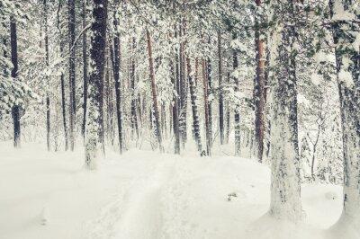 Väggdekor Snöfall på vintern skogen.