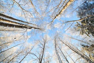 Väggdekor Snötäckt träd perspektiv tittar upp