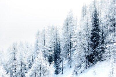 Väggdekor Snötäckta skogen