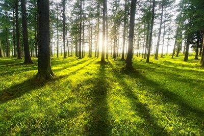 Väggdekor solig skog
