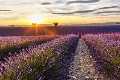 Väggdekor Solnedgång på en lavendel fält med två träd