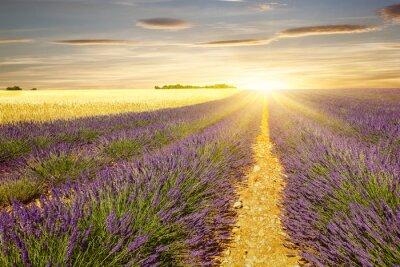 Väggdekor Solnedgång på lavendel och vetefält