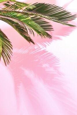 Väggdekor Sommar tropisk pastell bakgrund med palm