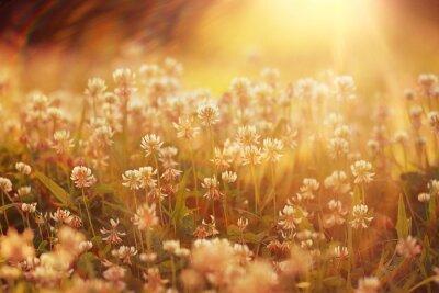 Väggdekor sommarlandskap bakgrund sol blommor Strålar