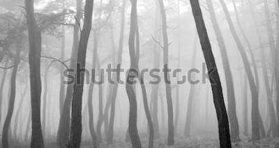 Väggdekor Sörja träd sett igenom dimman