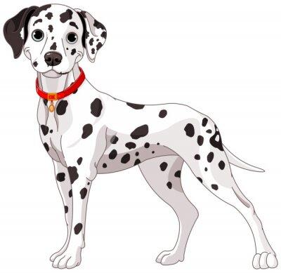 Väggdekor Söt Dalmatian Dog
