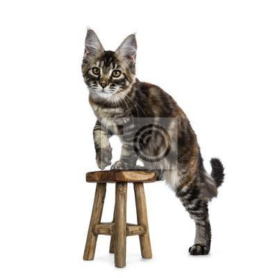 Katt Trampar