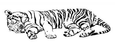 Väggdekor Sova tigern.