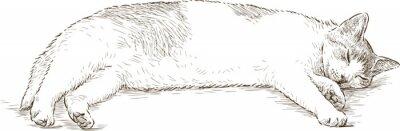 Väggdekor sovande katt