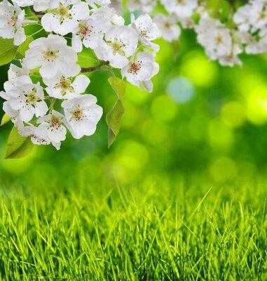 Väggdekor Spring blossom och gräs