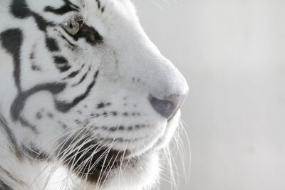 Väggdekor Stående White Tiger