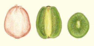 Väggdekor Studi di frutta: kiwi