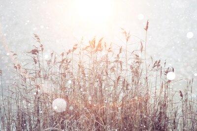 Väggdekor suddig vinter bakgrund, torra gräs snöflingor