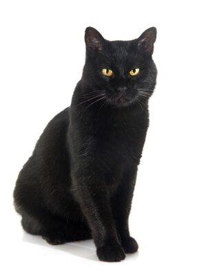 Väggdekor svart katt