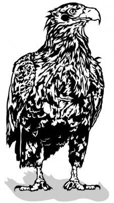 Väggdekor Svart och White Eagle - Beskrivs Illustration, Vector
