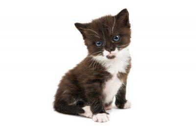 Väggdekor svartvit kattunge isolerade