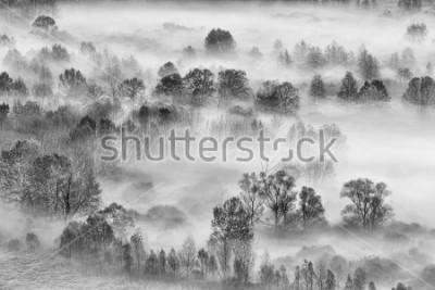 Väggdekor Svartvitt landskap, den dimmiga skogen, Italien