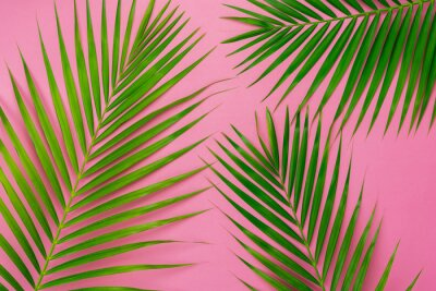 Väggdekor Table top view aerial image of summer season holiday background concept.Flat lay coconut or palm green leaf on modern rustic pink paper backdrop.Free space for creative design mock up text for content