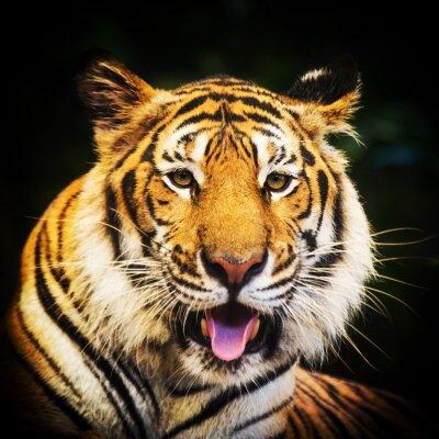 Väggdekor Tiger porträtt av en bengal tiger.