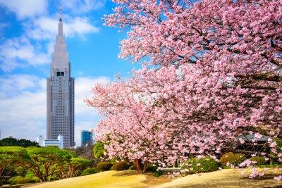 Väggdekor Tokyo, Japan på Shinjuku Gyoen Park under våren