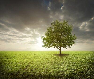 Väggdekor Träd