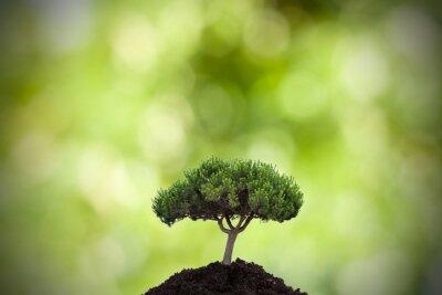 Väggdekor träd i förgrunden