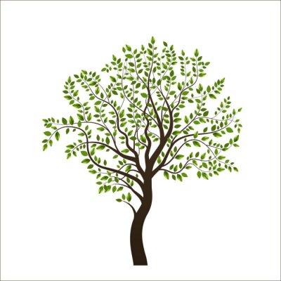 Väggdekor Träd isolerade på vit bakgrund