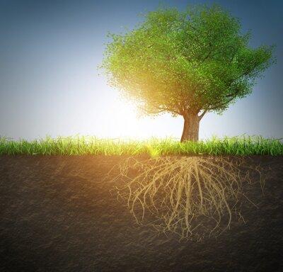 Väggdekor träd med rötterna