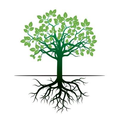 Väggdekor Träd och rötter. Vektor illustrationen.