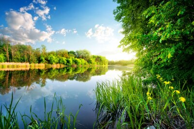 Väggdekor Träd vid lugna floden