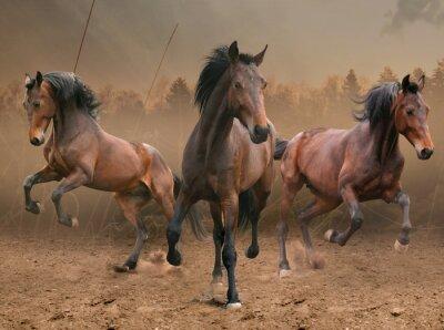 Väggdekor tre hästar