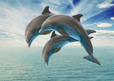 Väggdekor tre hoppande delfiner