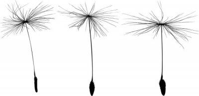 Väggdekor tre svarta maskros frön silhuett isolerad på vitt