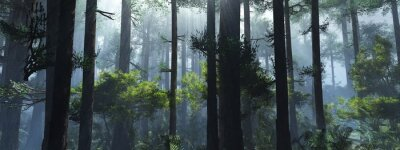 Väggdekor Trees in the fog. The smoke in the forest in the morning. A misty morning among the trees. 3D rendering