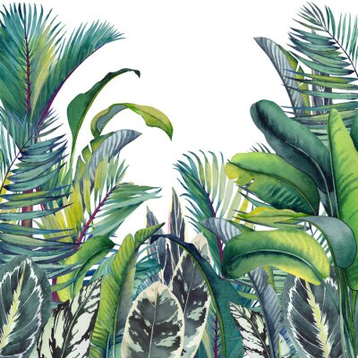 Väggdekor Tropical card with palm trees, banana and calathea leaves. Watercolor illustration on white background.