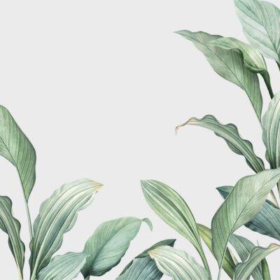 Väggdekor Tropical leaves background