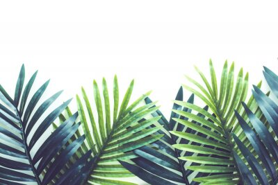 Väggdekor Tropical leaves foliage plant close up with white copy space background.Nature and summer concepts ideas