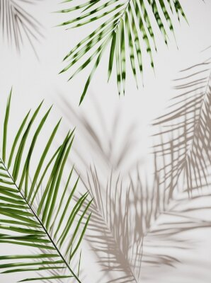 Väggdekor Tropical palm green leaves on  light pastel background. Unobtrusive botanical background with shadow on the wall - trend frame, cover, card, postcard, graphic design - 3D, render, illustration.
