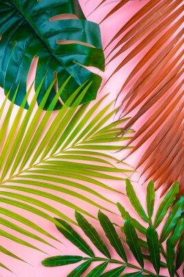 Väggdekor tropical palm leaf pink sweet background