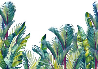 Väggdekor Tropical palm trees and banana leaves. Isolated watercolor background.