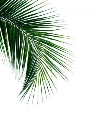 Väggdekor tropisk kokosnöt palmblad isolerad på vit bakgrund