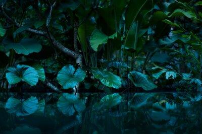 Väggdekor tropisk regnskog med vattenspegel