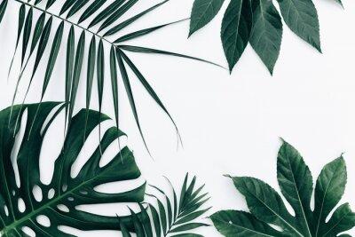 Väggdekor Tropisk trendig bakgrund. Löv över vit bakgrund
