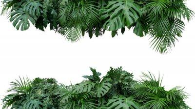Väggdekor Tropiska löv bladverk växt buske blommar arrangemang natur bakgrund isolerad på vit bakgrund, klippning ingår.