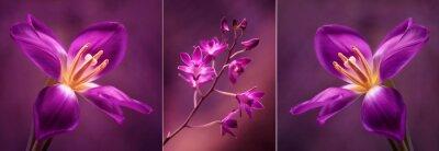Väggdekor Tulipany i Orchidea